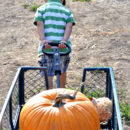 We're Off to the Pumpkin Patch: Orange Photo-Shoot