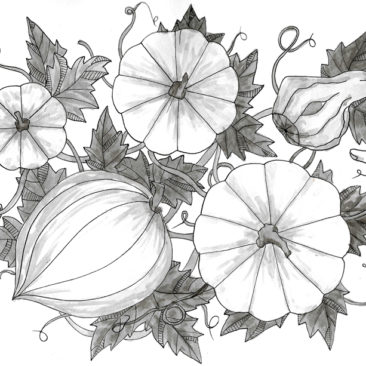 Ink Pen Botanical Drawings
